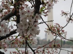 flowers and Washington monument