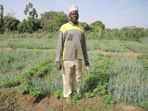 0786 Issah Bukari grows groundnuts for seed on edge of sunken onion beds to profit from irrigation water