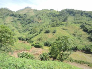 aa 8196 cassava on eroded hilltop