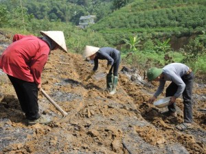 aa 8381 Hoang Van Hoi and family planting groundnut as cassava intercrop