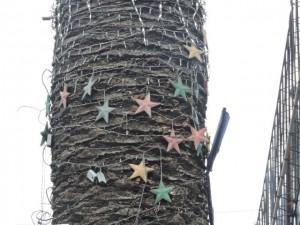 estrellas-en-palmera