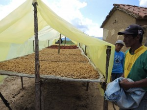 maize, chilli and groundnut in solar