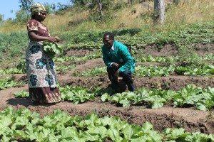 Man and woman harvest vegetables