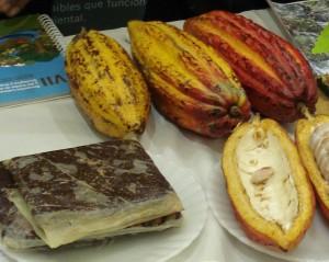 cacao y árboles