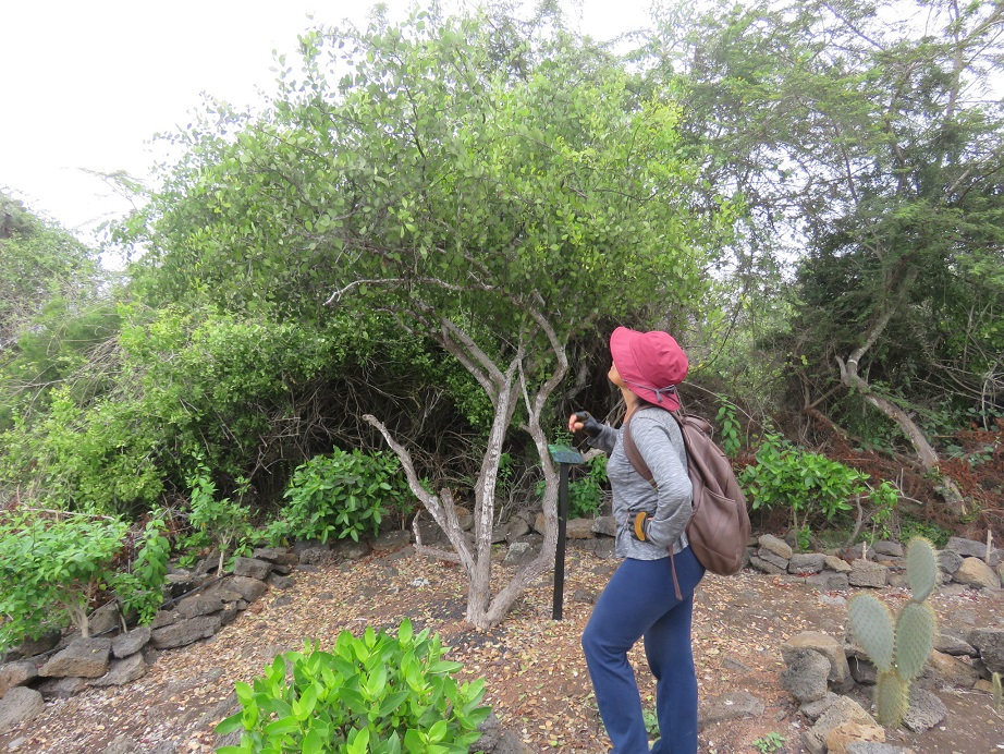 Biological pest control in the Galapagos forest
